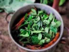 Pot-ayahuasca